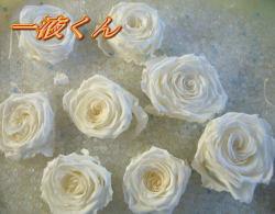 スーパー1液くん薔薇写真27